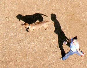 Aerial shot of dog and walker
