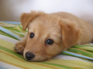 A photo of a puppy resting on a blanket