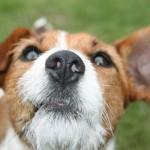 A photo of dog looking upwards
