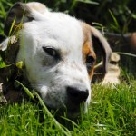 A photo of dog lying in the grass