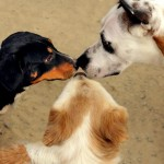 A photo of three dogs saying hello to each other